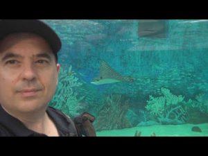 Cebu Ocean Park – The Largest Oceanarium in the Philippines